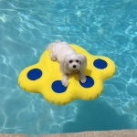 "Paws Aboard Doggy Lazy Raft Small Yellow 25.5"" x 29"""